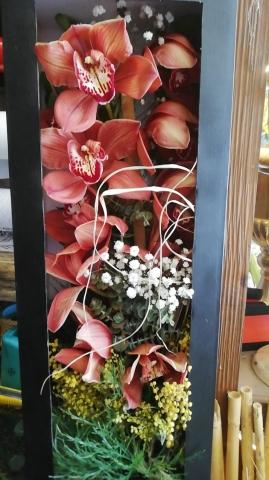 kutu orkide
